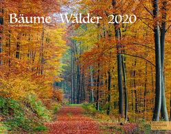 Bäume-Wälder 2020