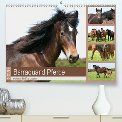 Barraquand Pferde – seltene Südfranzosen (Premium, hochwertiger DIN A2 Wandkalender 2020, Kunstdruck in Hochglanz) von Bölts,  Meike