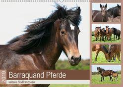 Barraquand Pferde – seltene Südfranzosen (Wandkalender 2019 DIN A2 quer) von Bölts,  Meike