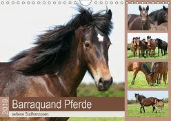 Barraquand Pferde – seltene Südfranzosen (Wandkalender 2019 DIN A4 quer) von Bölts,  Meike