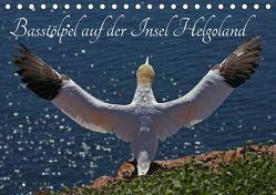 Basstölpel auf der Insel Helgoland (Tischkalender 2019 DIN A5 quer) von Konieczka,  Klaus