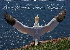 Basstölpel auf der Insel Helgoland (Wandkalender 2019 DIN A2 quer) von Konieczka,  Klaus