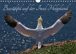 Basstölpel auf der Insel Helgoland (Wandkalender 2019 DIN A4 quer) von Konieczka,  Klaus