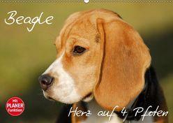 Beagle – Herz auf 4 Pfoten (Wandkalender 2019 DIN A2 quer) von Starick,  Sigrid