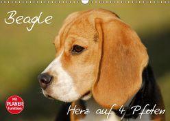 Beagle – Herz auf 4 Pfoten (Wandkalender 2019 DIN A3 quer) von Starick,  Sigrid