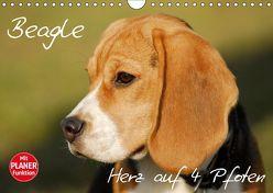 Beagle – Herz auf 4 Pfoten (Wandkalender 2019 DIN A4 quer) von Starick,  Sigrid