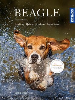 Beagle von Strodtbeck,  Sophie