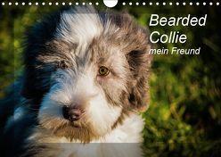 Bearded Collie, mein Freund (Wandkalender 2019 DIN A4 quer) von Redl,  Ula