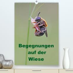 Begegnungen auf der Wiese (Premium, hochwertiger DIN A2 Wandkalender 2020, Kunstdruck in Hochglanz) von Sprenger,  Bernd