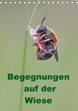 Begegnungen auf der Wiese (Tischkalender 2019 DIN A5 hoch) von Sprenger,  Bernd