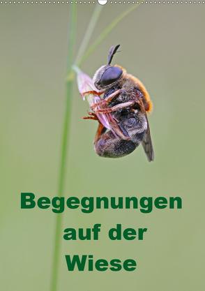 Begegnungen auf der Wiese (Wandkalender 2019 DIN A2 hoch) von Sprenger,  Bernd