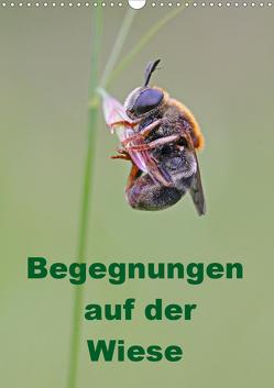 Begegnungen auf der Wiese (Wandkalender 2019 DIN A3 hoch) von Sprenger,  Bernd