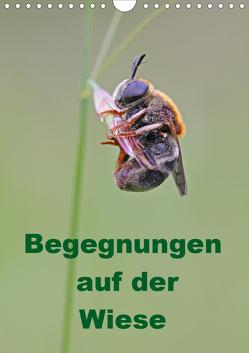 Begegnungen auf der Wiese (Wandkalender 2019 DIN A4 hoch) von Sprenger,  Bernd