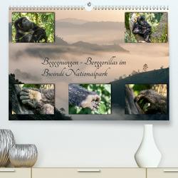 Begegnungen – Berggorillas im Bwindi Nationalpark (Premium, hochwertiger DIN A2 Wandkalender 2020, Kunstdruck in Hochglanz) von Jorda Motzkau,  Marisa
