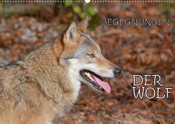 Begegnungen DER WOLF (Wandkalender 2021 DIN A2 quer) von GUGIGEI