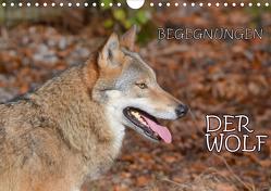 Begegnungen DER WOLF (Wandkalender 2021 DIN A4 quer) von GUGIGEI