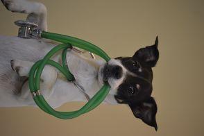 Behandlungstraining für Hunde von Hares,  Michaela, Theby,  Viviane