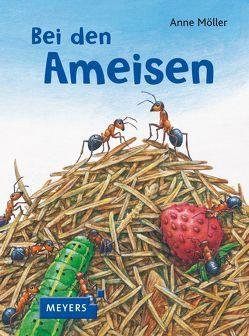 Bei den Ameisen von Möller,  Anne