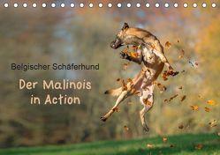 Belgischer Schäferhund – Der Malinois in Action (Tischkalender 2019 DIN A5 quer) von Brandt,  Tanja