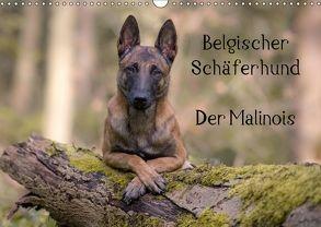 Belgischer Schäferhund – Der Malinois (Wandkalender 2018 DIN A3 quer) von Brandt,  Tanja
