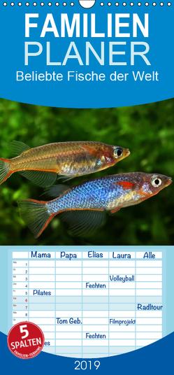 Beliebte Fische der Welt – Familienplaner hoch (Wandkalender 2019 , 21 cm x 45 cm, hoch) von Pohlmann,  Rudolf