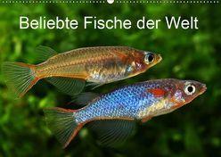 Beliebte Fische der Welt (Wandkalender 2019 DIN A2 quer) von Pohlmann,  Rudolf