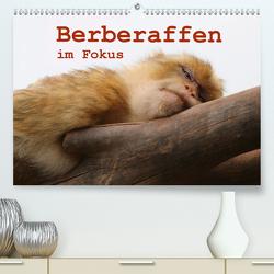 Berberaffen im Fokus (Premium, hochwertiger DIN A2 Wandkalender 2020, Kunstdruck in Hochglanz) von Sprenger,  Bernd