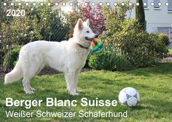Berger Blanc Suisse – Weißer Schweizer Schäferhund (Tischkalender 2020 DIN A5 quer) von Brunhilde Kesting,  Margarete