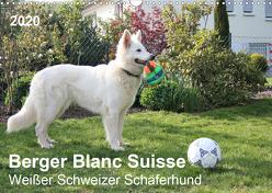 Berger Blanc Suisse – Weißer Schweizer Schäferhund (Wandkalender 2020 DIN A3 quer) von Brunhilde Kesting,  Margarete