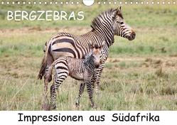 BERGZEBRAS Impressionen aus Südafrika (Wandkalender 2020 DIN A4 quer) von Thula