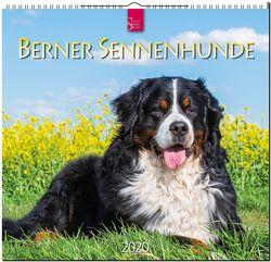 Berner Sennenhunde von Redaktion Verlagshaus Würzburg,  Bildagentur