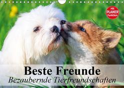 Beste Freunde. Bezaubernde Tierfreundschaften (Wandkalender 2019 DIN A4 quer) von Stanzer,  Elisabeth