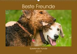 Beste Freunde – Spielende Hunde (Wandkalender 2019 DIN A2 quer) von Bölts,  Meike