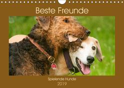 Beste Freunde – Spielende Hunde (Wandkalender 2019 DIN A4 quer) von Bölts,  Meike