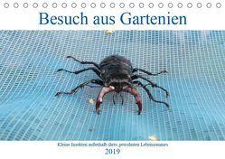 Besuch aus Gartenien – Kleine Insekten außerhalb ihres gewohnten Lebensraumes (Tischkalender 2019 DIN A5 quer) von Besenböck,  Ingrid
