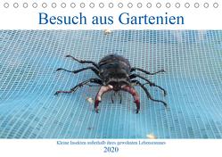 Besuch aus Gartenien – Kleine Insekten außerhalb ihres gewohnten Lebensraumes (Tischkalender 2020 DIN A5 quer) von Besenböck,  Ingrid