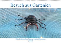 Besuch aus Gartenien – Kleine Insekten außerhalb ihres gewohnten Lebensraumes (Wandkalender 2020 DIN A2 quer) von Besenböck,  Ingrid