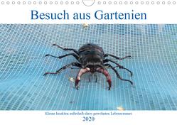 Besuch aus Gartenien – Kleine Insekten außerhalb ihres gewohnten Lebensraumes (Wandkalender 2020 DIN A4 quer) von Besenböck,  Ingrid