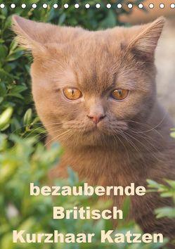 bezaubernde Britisch Kurzhaar Katzen (Tischkalender 2019 DIN A5 hoch) von Verena Scholze,  Fotodesign