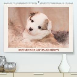 Bezaubernde Islandhundebabys (Premium, hochwertiger DIN A2 Wandkalender 2020, Kunstdruck in Hochglanz) von Scheurer,  Monika
