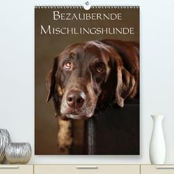 Bezaubernde Mischlingshunde (Premium, hochwertiger DIN A2 Wandkalender 2020, Kunstdruck in Hochglanz) von Behr,  Jana