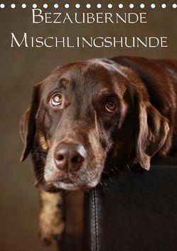 Bezaubernde Mischlingshunde (Tischkalender 2019 DIN A5 hoch) von Behr,  Jana