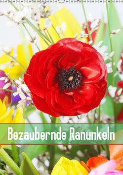 Bezaubernde Ranunkeln (Wandkalender 2019 DIN A2 hoch) von Kruse,  Gisela