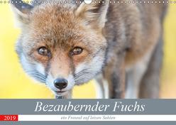 Bezaubernder Fuchs – ein Freund auf leisen Sohlen (Wandkalender 2019 DIN A3 quer) von Petzl,  Perdita