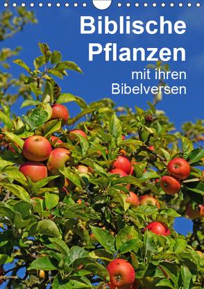 Biblische Pflanzen mit ihren Bibelversen (Wandkalender 2019 DIN A4 hoch) von Vorndran,  Hans-Georg