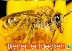 Bienen entdecken (Wandkalender 2019 DIN A2 quer) von CALVENDO