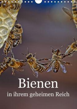 Bienen in ihrem geheimen Reich (Wandkalender 2018 DIN A4 hoch) von Bangert,  Mark