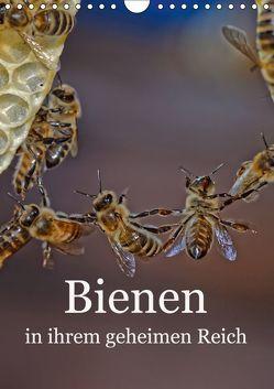 Bienen in ihrem geheimen Reich (Wandkalender 2019 DIN A4 hoch) von Bangert,  Mark