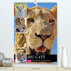 BIG CATS Fazinierende Nah-Portraits (Premium, hochwertiger DIN A2 Wandkalender 2020, Kunstdruck in Hochglanz) von Fraatz,  Barbara