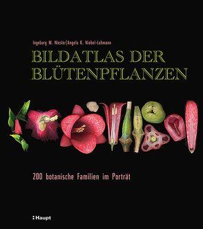 Bildatlas der Blütenpflanzen von Niebel-Lohmann,  Angela K., Niesler,  Ingeborg M.
